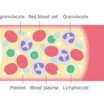 human platelet aggregation
